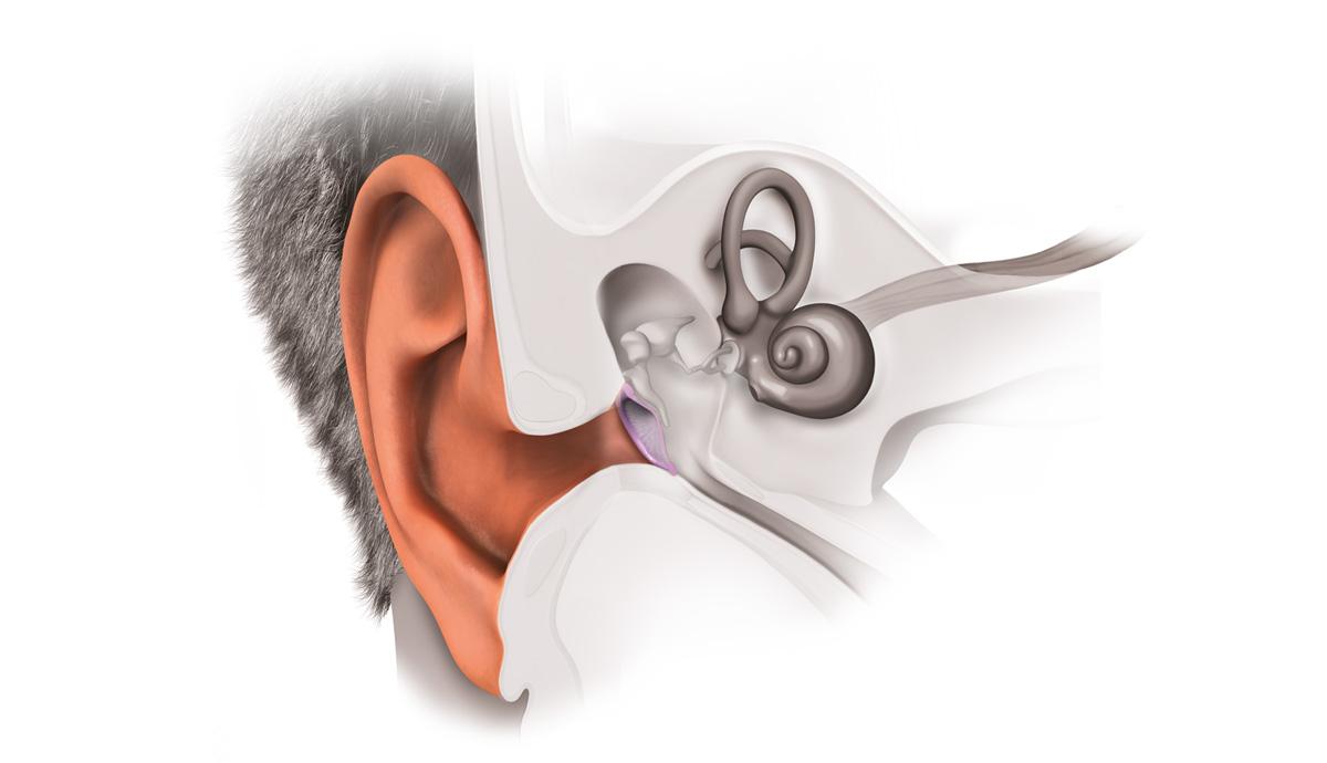 บทความ การตรวจสอบความดังเสียง Noise Measurement